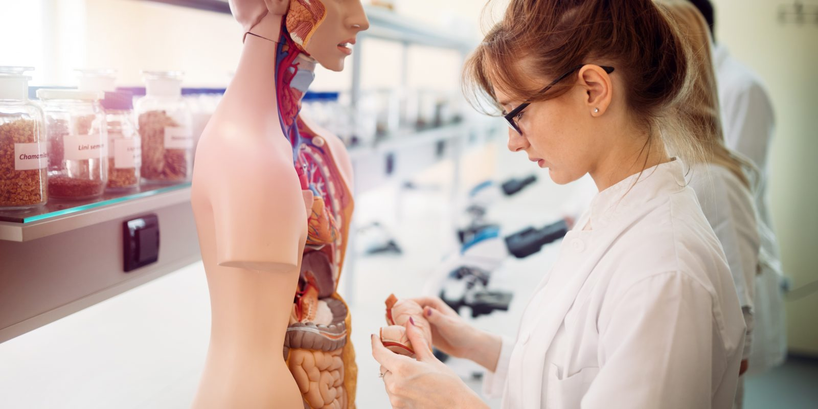 Lady studying the anatomy